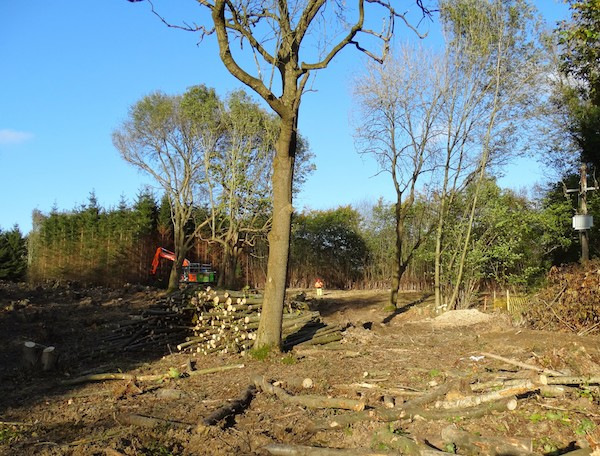 large scale tree clearance project