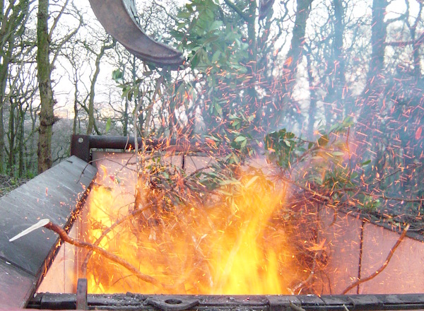 Incinerating Rhododendron invasive species with phytophtora