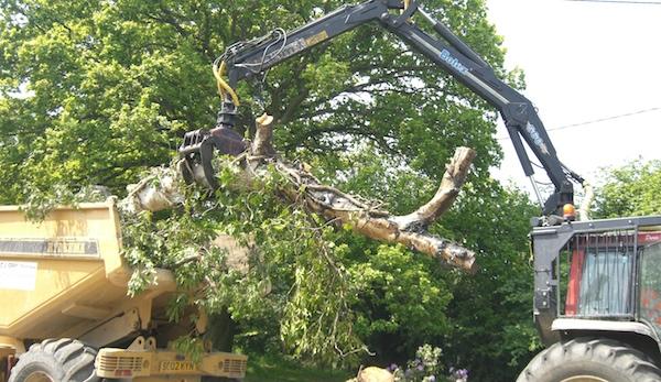 Asian Long Horned Beetle diseased timber invasive species
